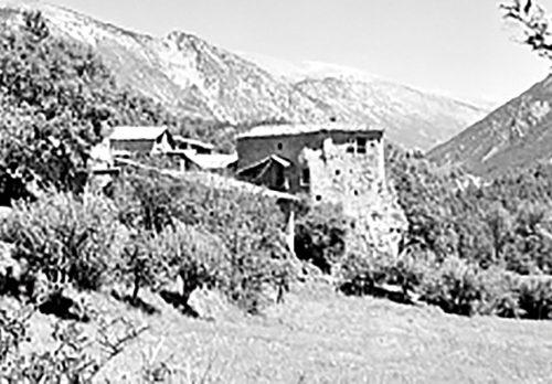 Montergull